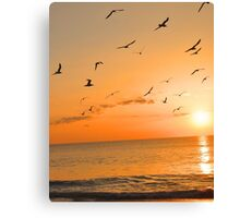 Seagulls in the Sunset Canvas Print