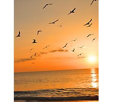 Seagulls in the Sunset Photographic Print