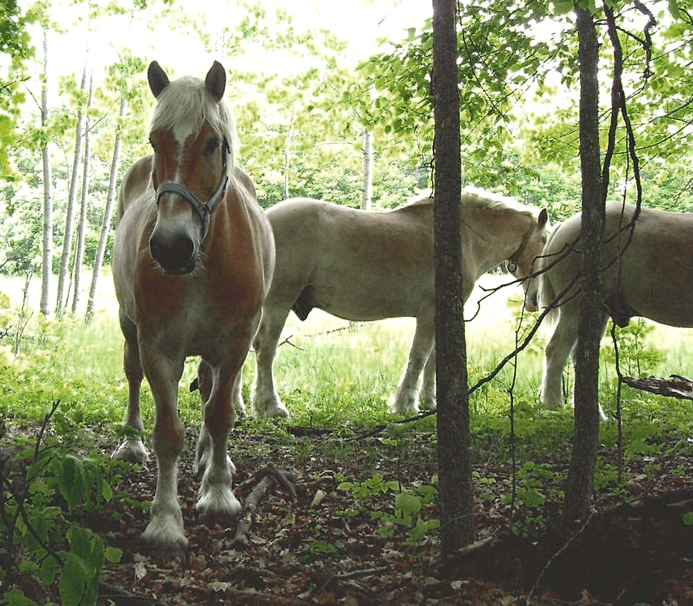 Gorgeous horses by nikspix