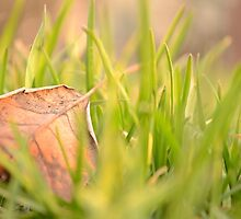 Fallen Leaf in Natural Grass Left by Inimma