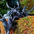 Anyone seen Rudolf? by dgscotland