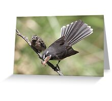 """Grey Fantail and chick ~ """"Lunch Has Arrived""""  Greeting Card"""