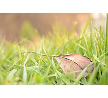 Fallen Leaf in Natural Grass Right Photographic Print