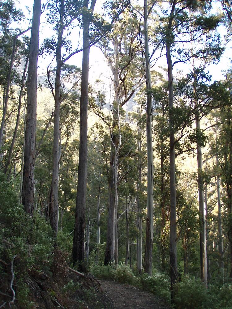 I love TALL trees - and any trees really by gaylene