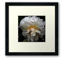 white camellia_3 Framed Print