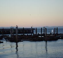 Fishermans Wharf (Seals) SF by Ezza