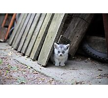 Blue Eyed Kitten Looking Relaxed Photographic Print