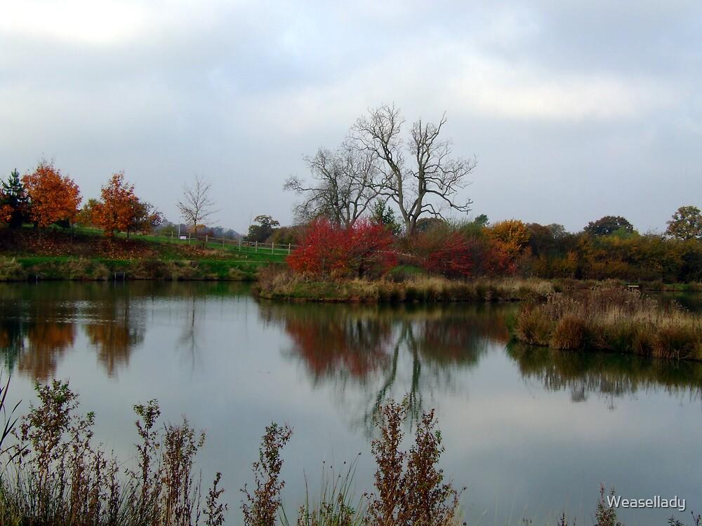 Still waters by Weasellady