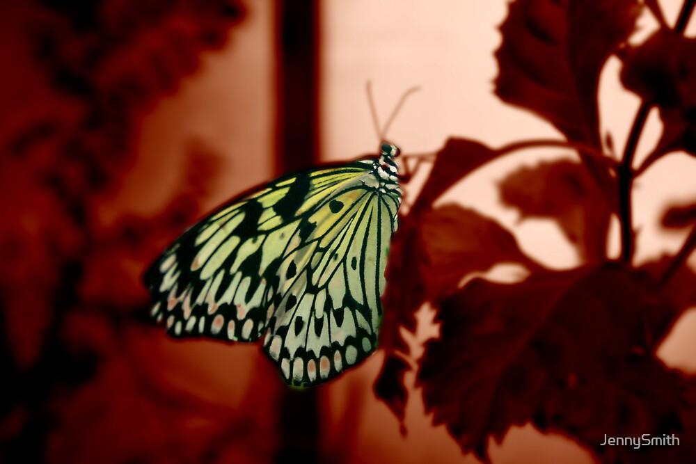 butterfly by JennySmith