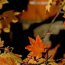 Maple Leaves by Honario