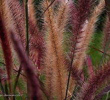 Ornamental grasses by Jamaboop