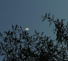 Moon through the trees by candy27