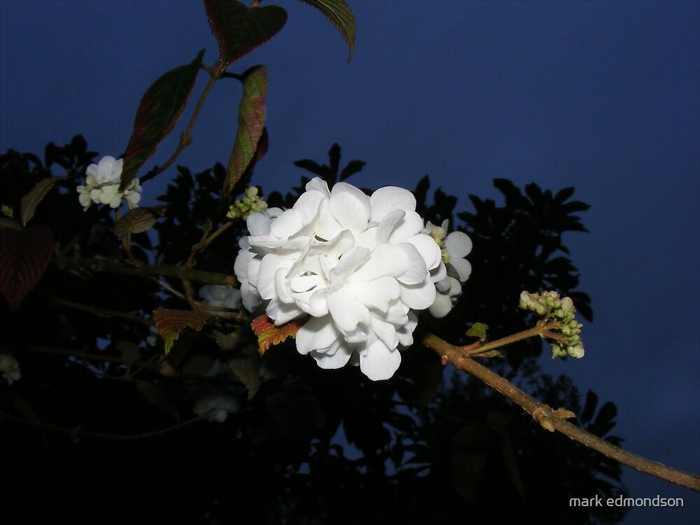 autumn flower by mark edmondson