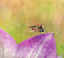 The Dance of the Hoverfly by cresslerphotos