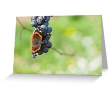 Red Admiral Eating Grapes Greeting Card