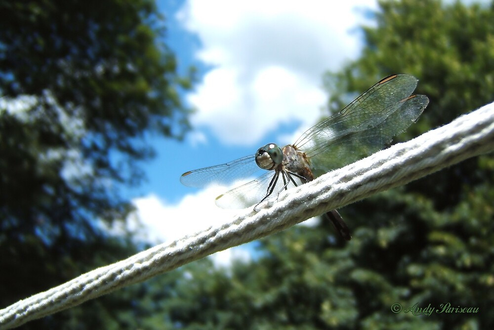 Dragonfly on clothes line by Andy2302