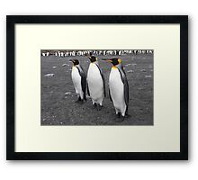 "King Penguins ~ ""On Parade"" Framed Print"