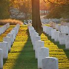 Arlington Cemetary  by Tracey Hampton