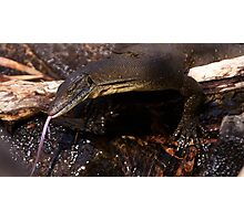Mertens Water Monitor ~ I hate photographers! Photographic Print