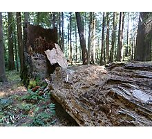 Gifford Pinchot National Forest Photographic Print