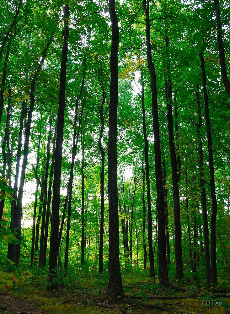 The Forest from the Trees by CBTan