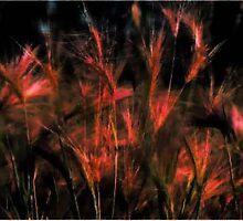 Fields of Barley by Karen Harding