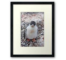 "Gentoo Penguin Chick ~ ""My life's goal....to grow into my feet!"" Framed Print"
