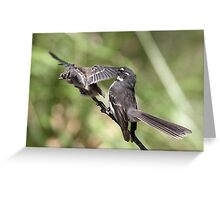 Grey Fantail and chick ~ Pre-flight Check   Greeting Card