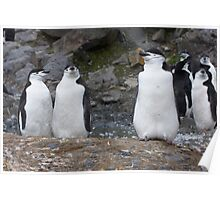 Chinstrap Penguins ~ Aerobics Workout Poster
