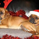 A Merry Pugalier Christmas by Justin French