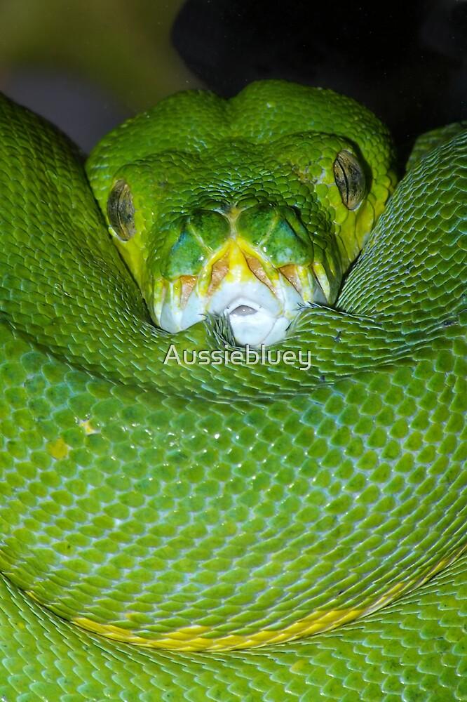 Green Tree Python. by Aussiebluey