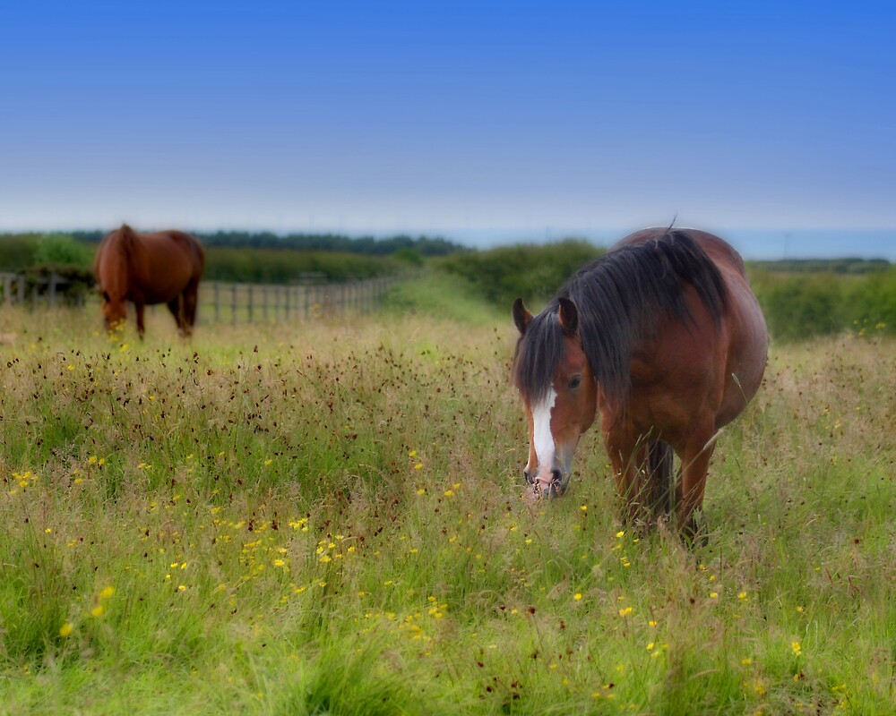 Dream Horses by Alan Hawkins