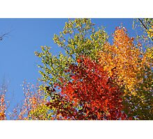 Foliage in Autumn Photographic Print