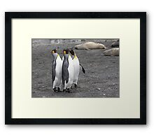 "King Penguins ~ ""The Line Dancers"" Framed Print"