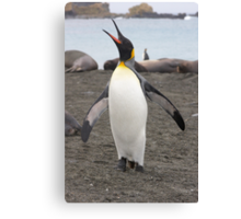 "King Penguin ~ ""Pavarotti    ♫♫ ♪ ♪ ♬ "" Canvas Print"