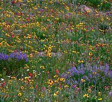 Wildflower abundance by george tuffy