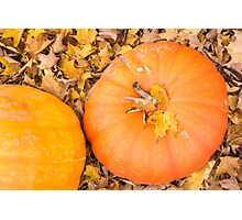 Two pumpkins Photographic Print