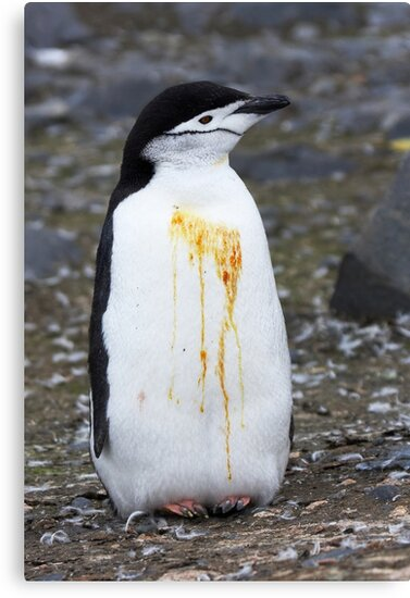 """Chinstrap Penguin ~ """"Who Flung Dung?"""" by Robert Elliott"""