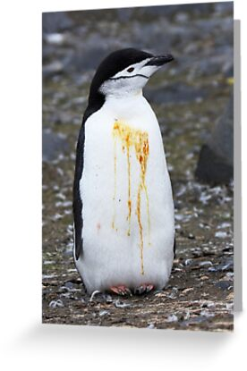 "Chinstrap Penguin ~ ""Who Flung Dung?"" by Robert Elliott"