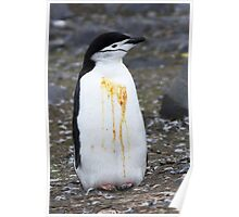 "Chinstrap Penguin ~ ""Who Flung Dung?"" Poster"