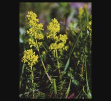 Galium Verum (Lady's Bedstraw), Inishmore, Aran Islands Kids Clothes