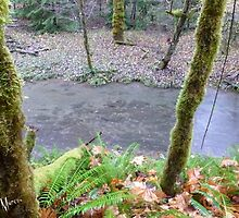 Salmon, Cowlitz River side channel by Penny Ward Marcus