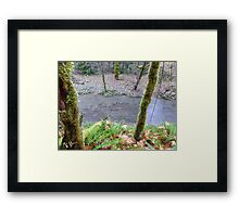 Salmon, Cowlitz River side channel Framed Print