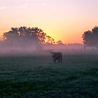 A cow at sunrise in the winter. by Stacey Lynn Payne