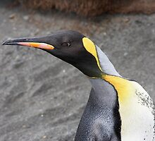 "King Penguin ~ ""Alert to Danger"" by Robert Elliott"