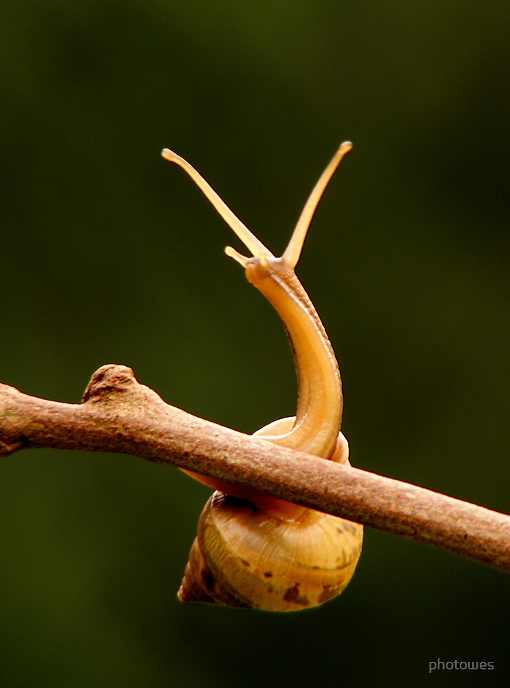 Small snail 1 by photowes