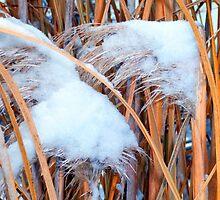 Snow On The Pampas by WildestArt