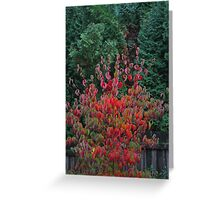 dogwood with conifer Greeting Card