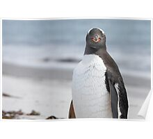 "Gentoo Penguin ~ ""The Gentleman"" Poster"