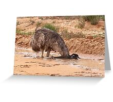 Emu ~ Drink with your back to the Wind Greeting Card